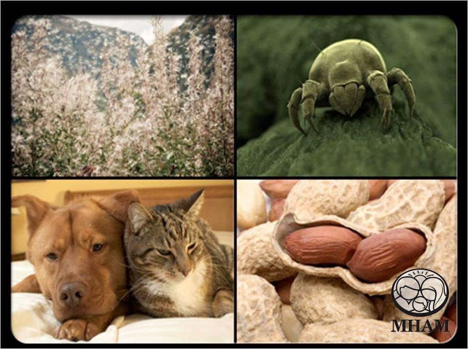 penawar-asma-jenis